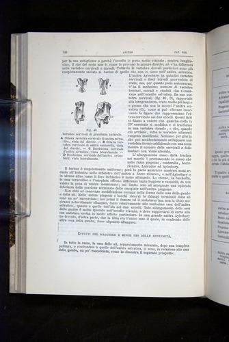 Image of Darwin-F920-1876-248