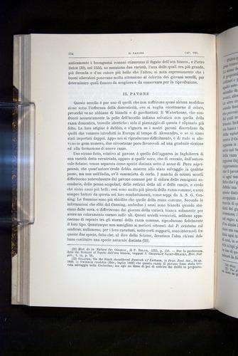 Image of Darwin-F920-1876-254