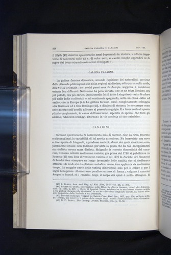 Image of Darwin-F920-1876-258