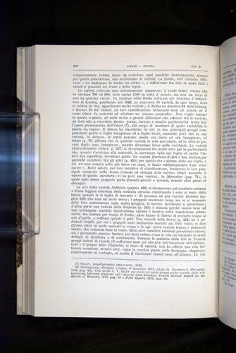 Image of Darwin-F920-1876-296