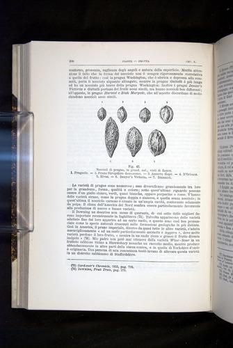 Image of Darwin-F920-1876-308