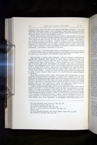 Image of Darwin-F920-1876-338