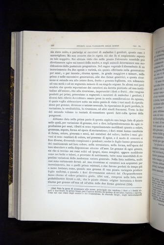Image of Darwin-F920-1876-368