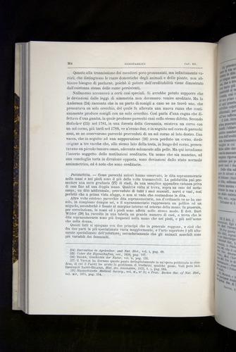 Image of Darwin-F920-1876-384