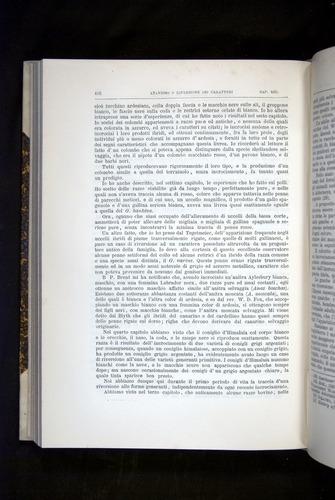 Image of Darwin-F920-1876-410