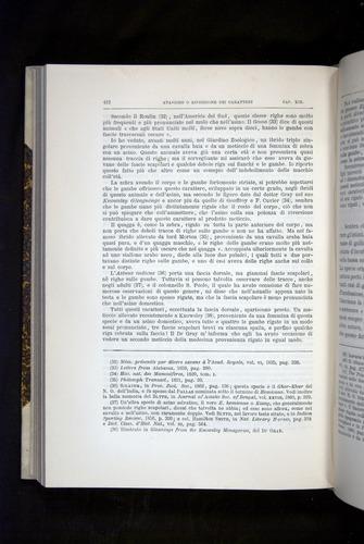 Image of Darwin-F920-1876-412