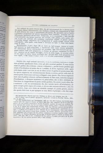 Image of Darwin-F920-1876-413