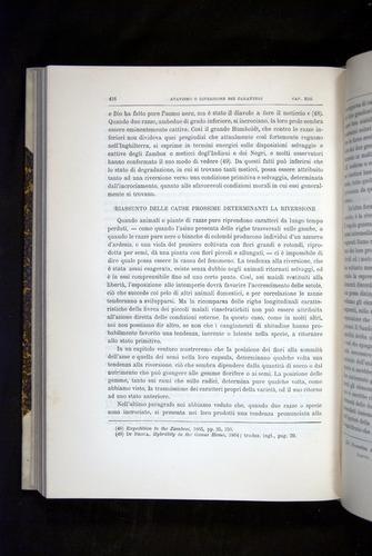 Image of Darwin-F920-1876-416