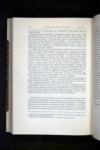 Image of Darwin-F920-1876-426