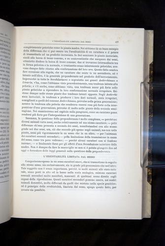 Image of Darwin-F920-1876-437