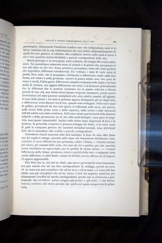 Image of Darwin-F920-1876-441