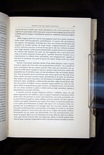 Image of Darwin-F920-1876-447