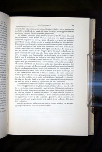Image of Darwin-F920-1876-461