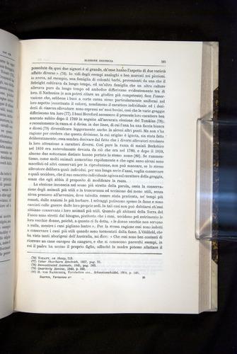 Image of Darwin-F920-1876-561