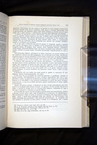 Image of Darwin-F920-1876-619