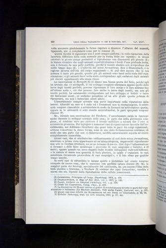 Image of Darwin-F920-1876-632