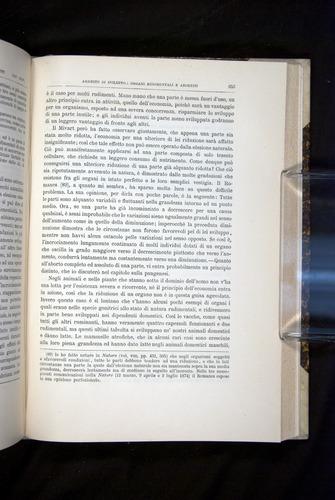 Image of Darwin-F920-1876-653