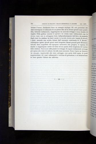 Image of Darwin-F920-1876-654