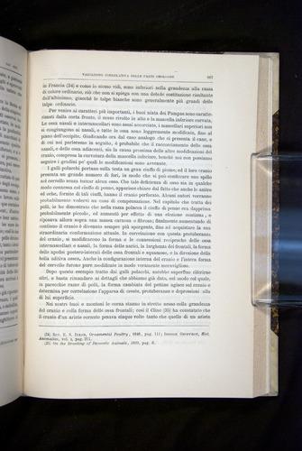 Image of Darwin-F920-1876-667