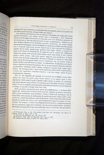 Image of Darwin-F920-1876-675
