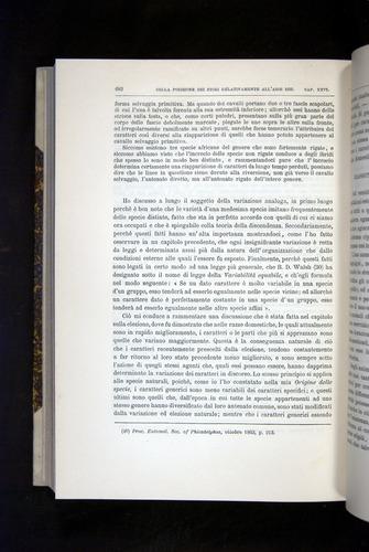 Image of Darwin-F920-1876-682