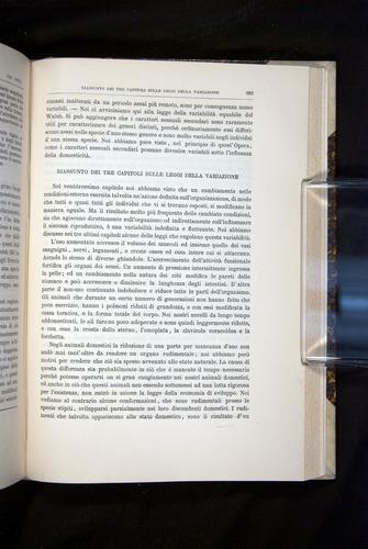 Image of Darwin-F920-1876-683