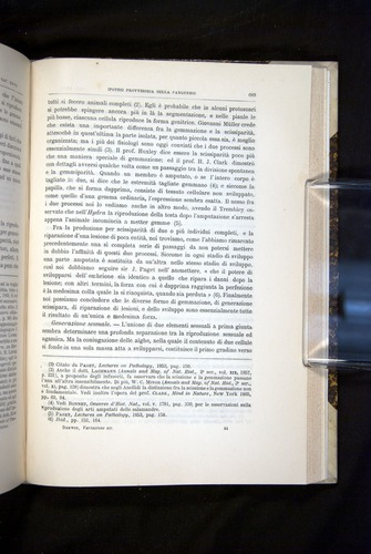 Image of Darwin-F920-1876-689