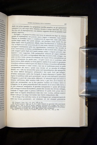 Image of Darwin-F920-1876-697