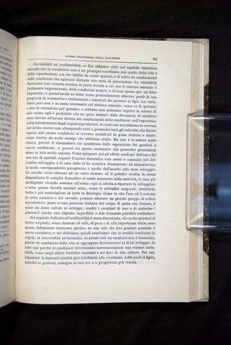 Image of Darwin-F920-1876-701