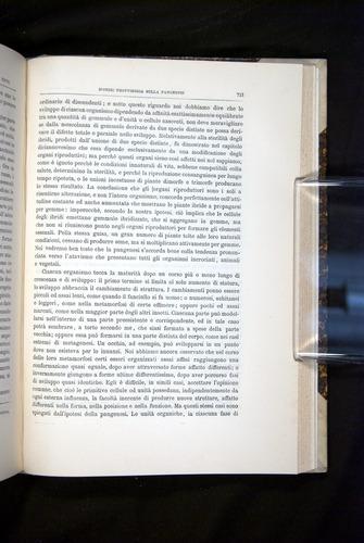 Image of Darwin-F920-1876-713