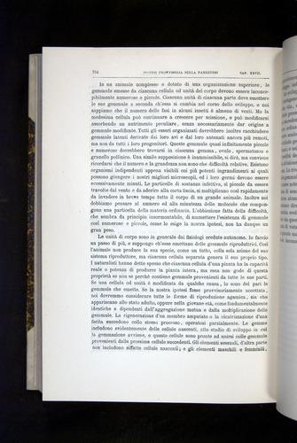 Image of Darwin-F920-1876-724