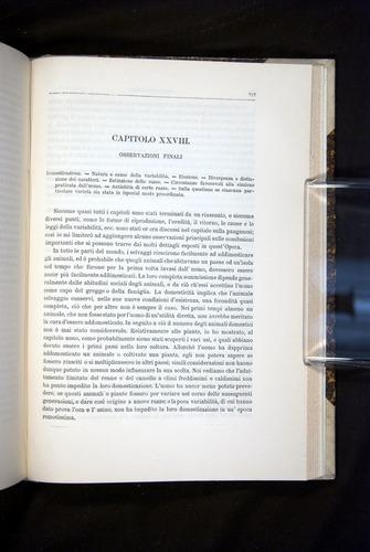 Image of Darwin-F920-1876-727