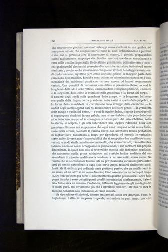 Image of Darwin-F920-1876-740