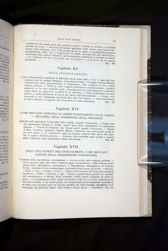 Image of Darwin-F920-1876-755