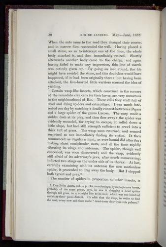 Image of Darwin-F11-1839-00040