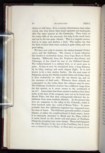 Image of Darwin-F11-1839-00068
