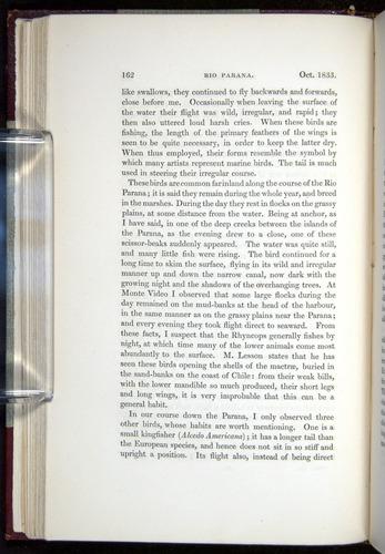 Image of Darwin-F11-1839-00162