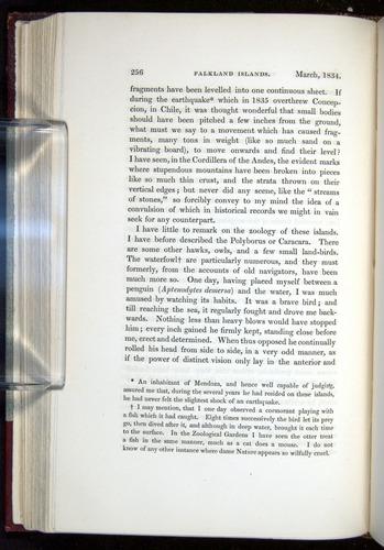 Image of Darwin-F11-1839-00256