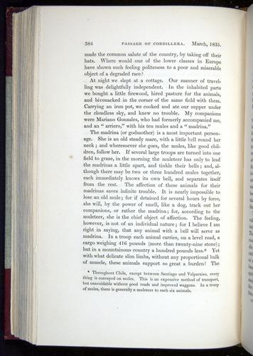 Image of Darwin-F11-1839-00384