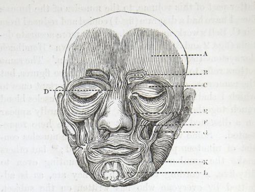 Image of Darwin-F1142-1872-zzzz-det-024-1