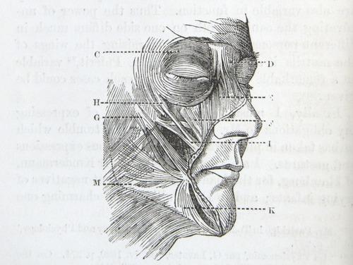 Image of Darwin-F1142-1872-zzzz-det-024-2