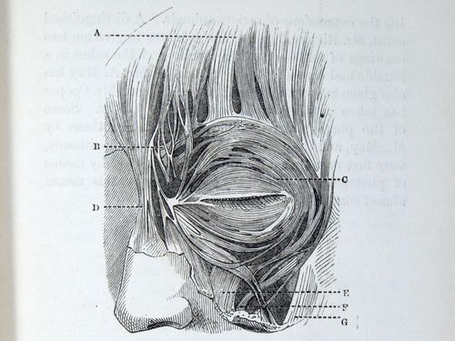 Image of Darwin-F1142-1872-zzzz-det-025