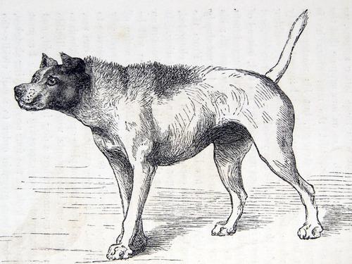 Image of Darwin-F1142-1872-zzzz-det-052