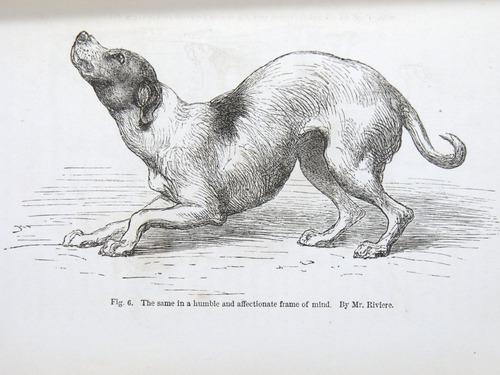 Image of Darwin-F1142-1872-zzzz-det-053