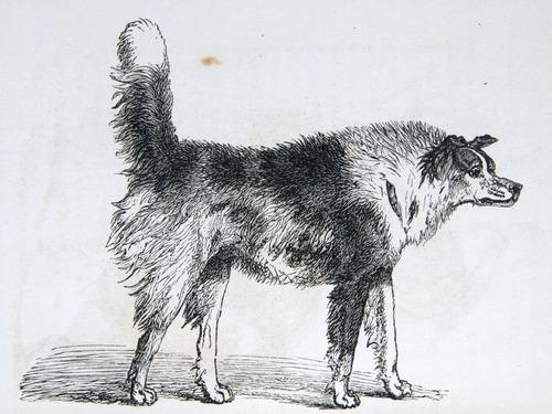 Image of Darwin-F1142-1872-zzzz-det-054