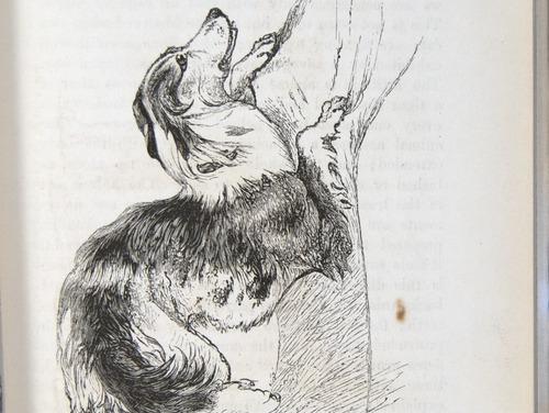 Image of Darwin-F1142-1872-zzzz-det-055