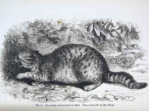 Image of Darwin-F1142-1872-zzzz-det-058