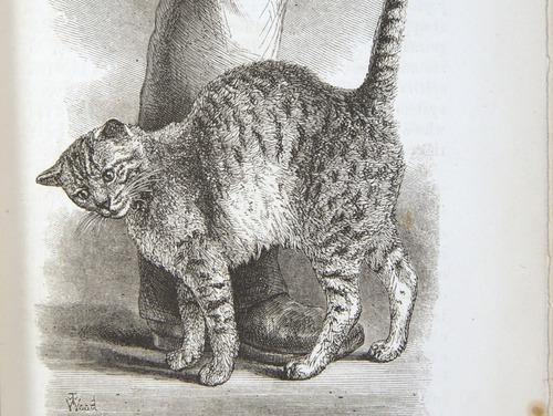 Image of Darwin-F1142-1872-zzzz-det-059