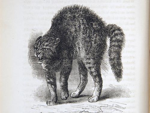 Image of Darwin-F1142-1872-zzzz-det-128