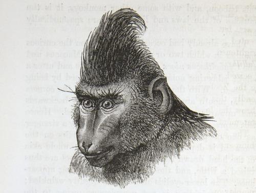 Image of Darwin-F1142-1872-zzzz-det-136-1